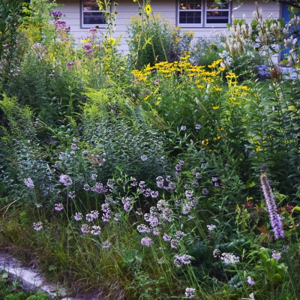 Mixed Garden Kit - Rain Garden